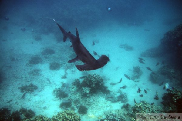 Tubarões me mordam