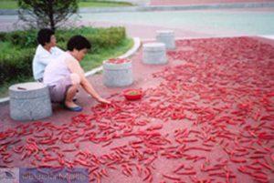 Pimenta na calçada dos outros é kimchi