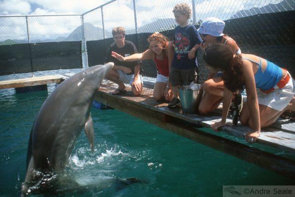 No cercadinho dos golfinhos