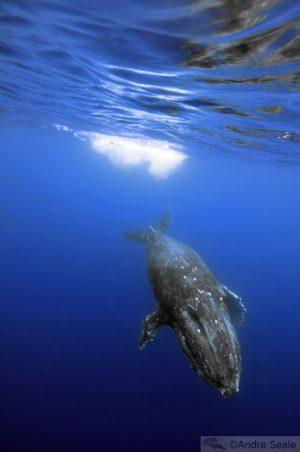No mar de Kailua-Kona