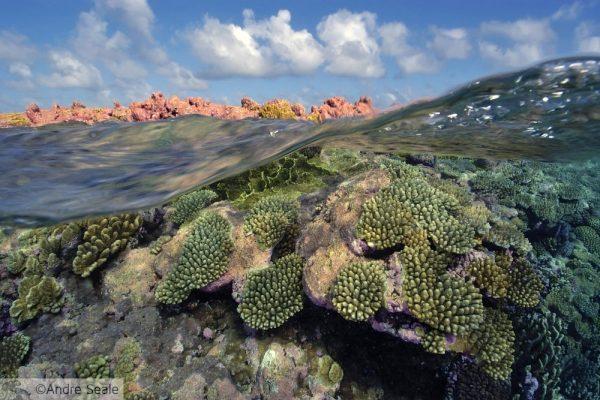Acidificação dos oceanos