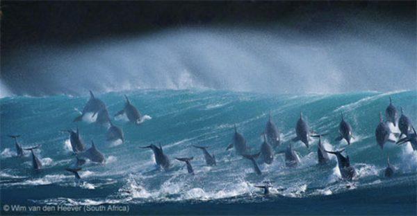 WPY 13 - Wim van den Heever - Surfing delight