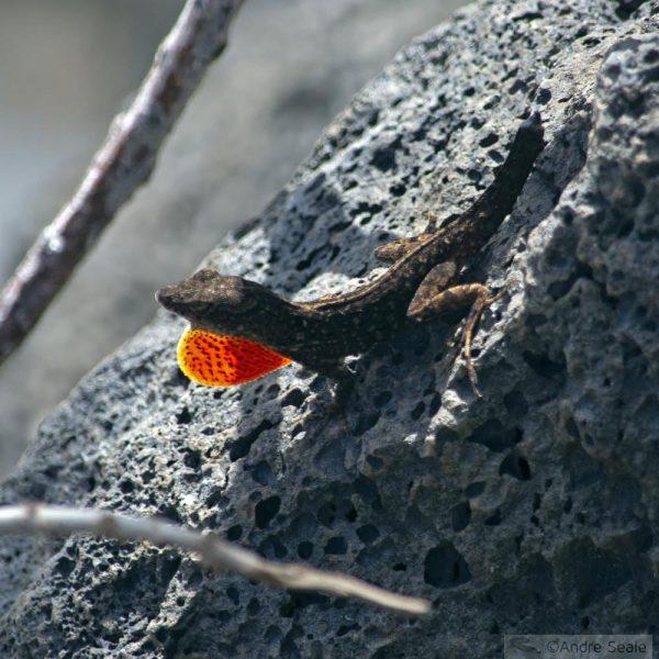 cobras e lagartos