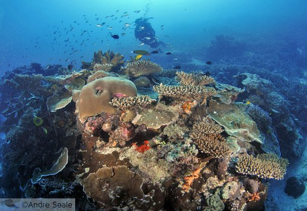 Stress nos corais da GBR Norte
