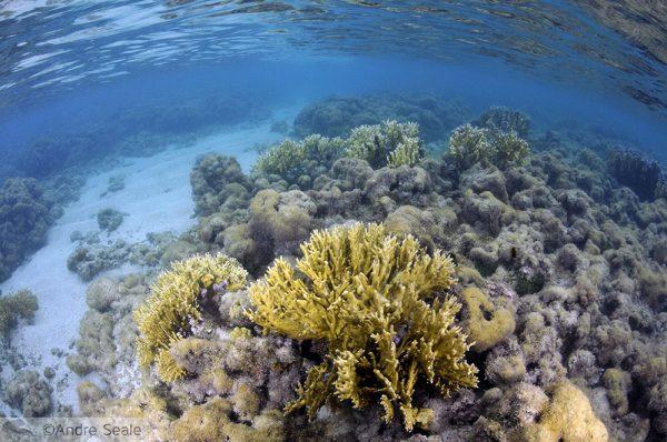 Corais de Maragogi