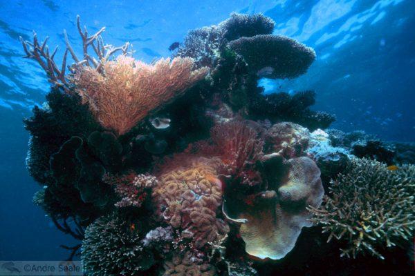 SOS Grande Barreira de Corais
