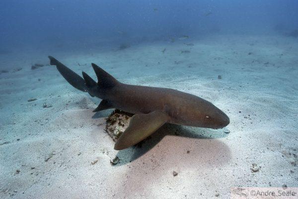 Dia da consciência pelos tubarões