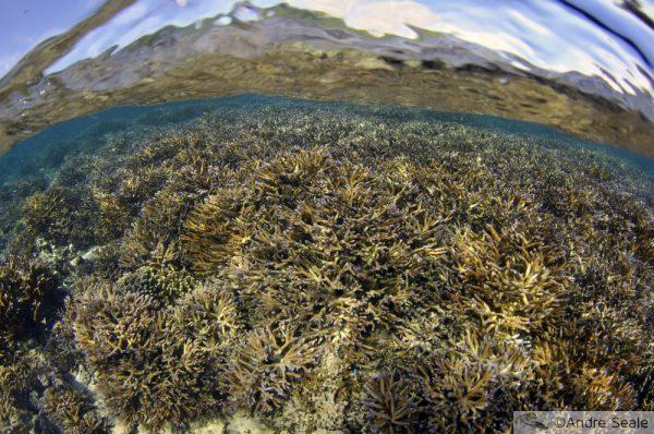 Chasing Coral no Netflix