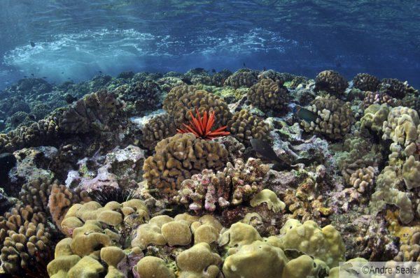 Venha logo conhecer os corais do Havaí